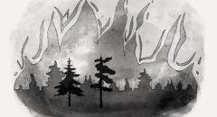 Гринпис: борьба с лесными пожарами