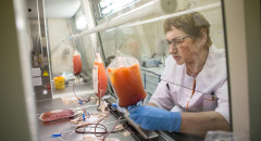 Тансплантация костного мозга  Лаборант выделяет из взятой крови лейкоциты. Они будут возвращены донору  27 мая 2015  Фото: Алексей Лощилов для ТД