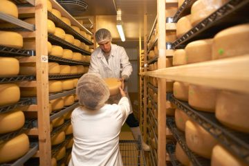 Workers putting cheese round for storage at farm factory