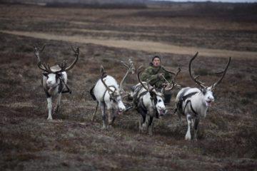 Ненец-пастух на упряжке оленей  © Greenpeace / Steve Morgan