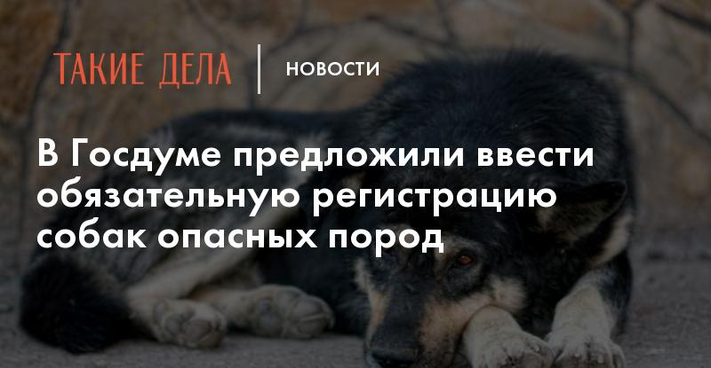В Госдуме предложили ввести обязательную регистрацию собак опасных пород