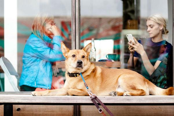 На фото на переднем плане лежит собака в ошейнике и на поводке, на заднем плане за стеклом витрины за столиком сидят две женщины.